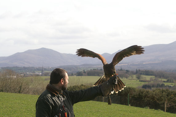 Private One Hour Hawk Walk